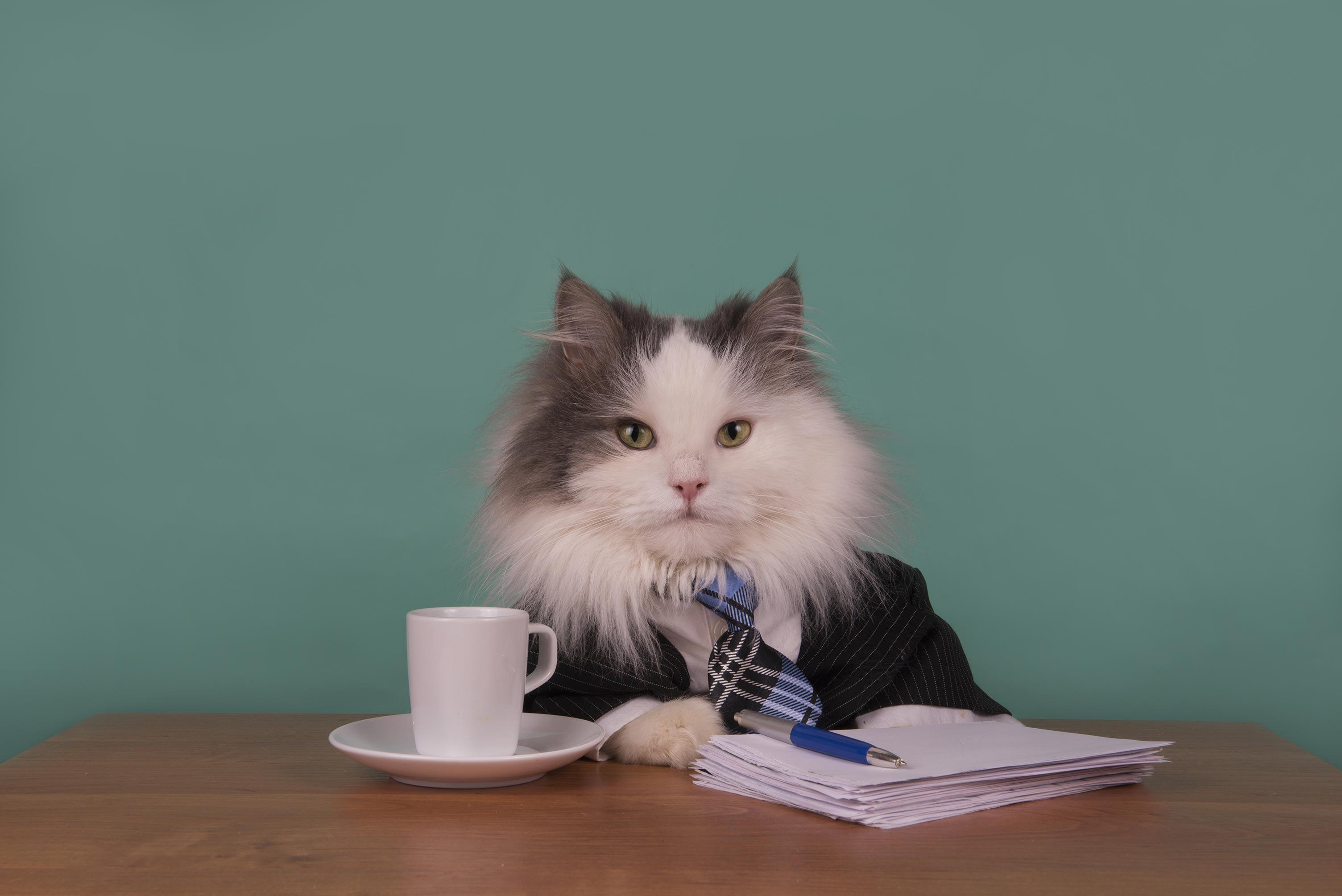Forretningskatt klar for arbeid